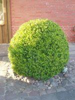 Gartenbau-Bolowski148